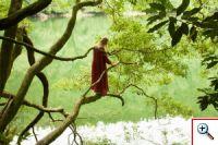 Mova Dreva